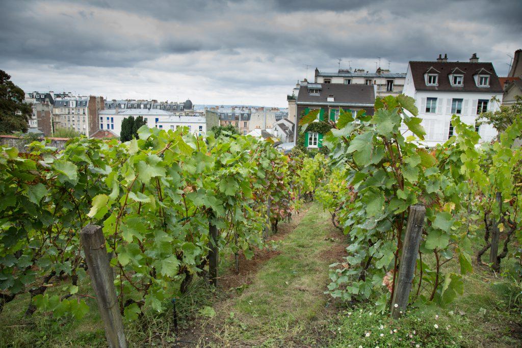 Clos Montmartre Vineyard in Paris