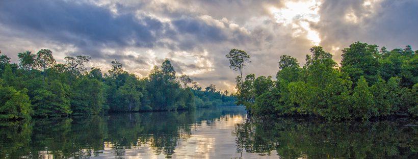 Mangroves around Kuala Lumpur