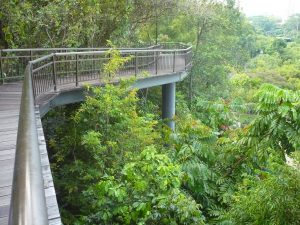 Kent Ridge Park in Singapore