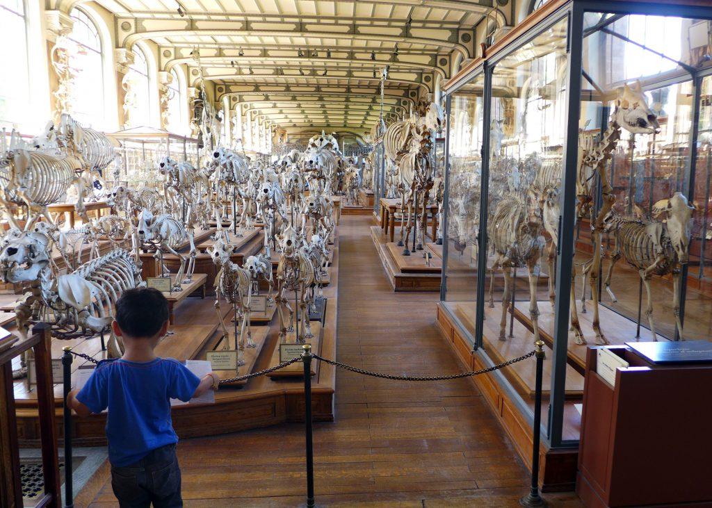 Jardin des Plantes - Museum