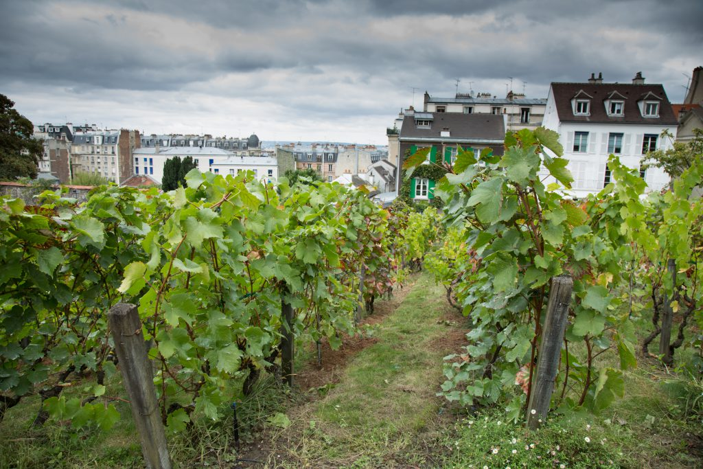 Clos Montmartre Vineyard in Paris