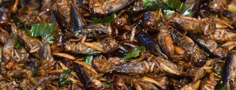 Friend Crickets in Cambodia