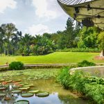 Fresh Air and Mighty Old Trees at Singapore's Botanic Gardens