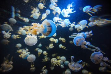 Jellyfish Singapore Aquarium