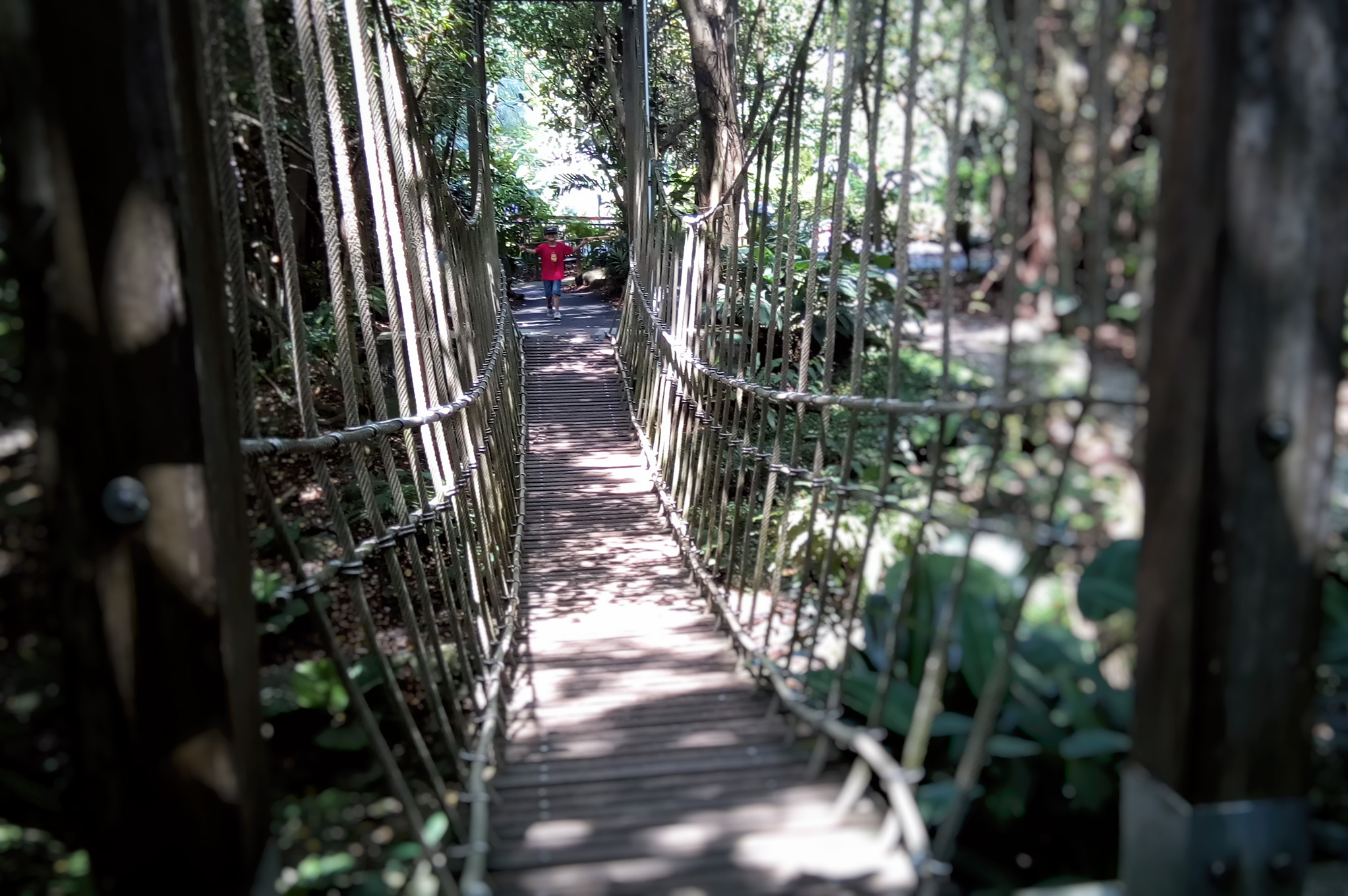 Jacob Ballas Jungle Bridge